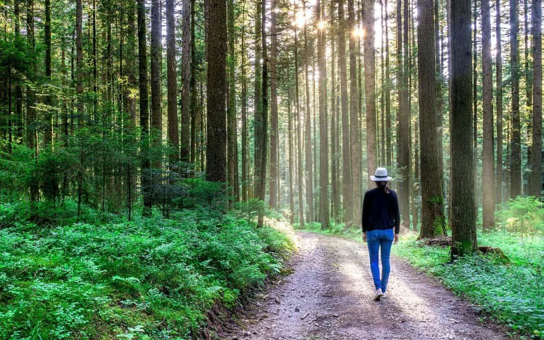 Frühlingsbewegung durch einen Achtsamkeitsspaziergang — mentale und körperliche Entrümpelung